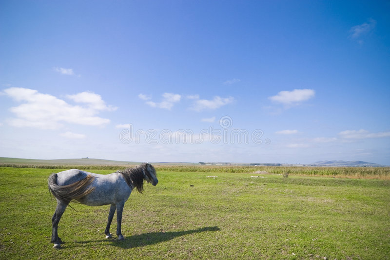 Download Horse on pasture stock image. Image of animal, field, natural - 3842689