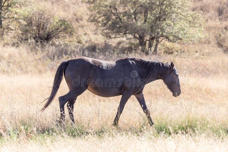 A horse in a pasture in the fall royalty free stock image