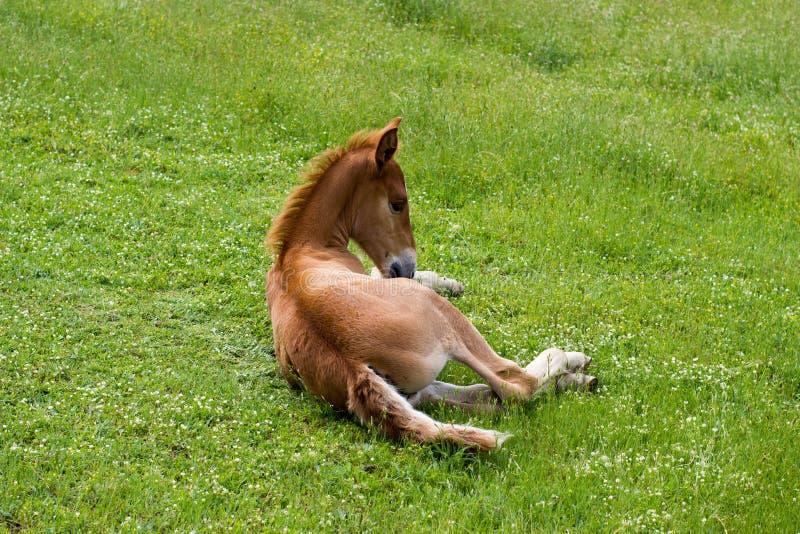 Horse, Pasture, Grass, Fauna Free Public Domain Cc0 Image