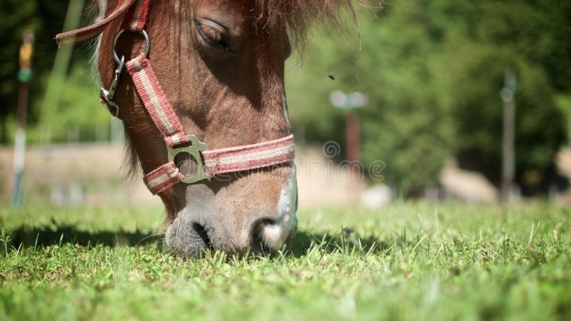 Horse on the pasture stock images