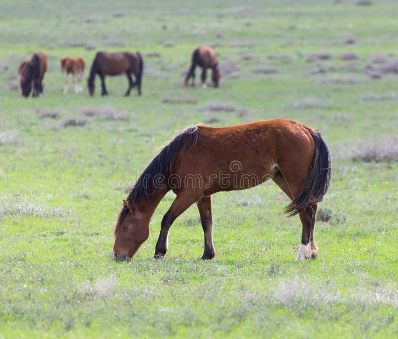 Horse on pasture stock photos