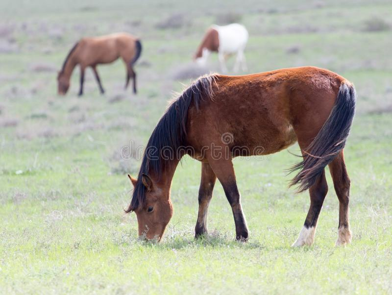Horse on pasture stock photo