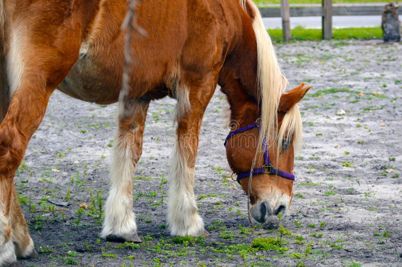 Horse in pasture. Image background stock images