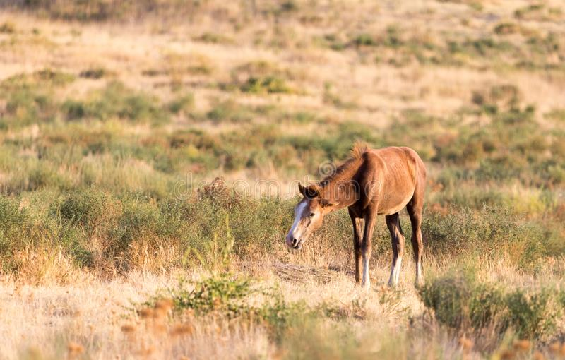 A horse in a pasture in nature royalty free stock photography