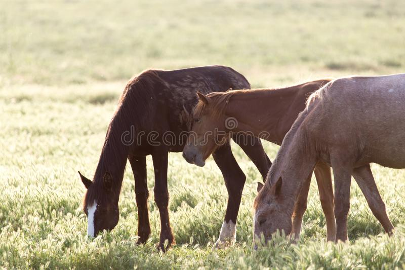 Horse on pasture stock image