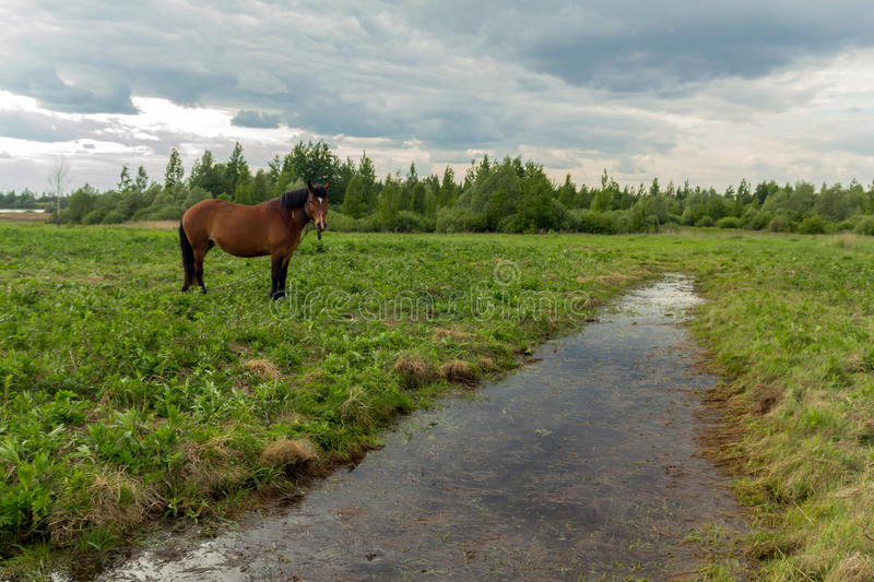 The Horse in the pasture royalty free stock image