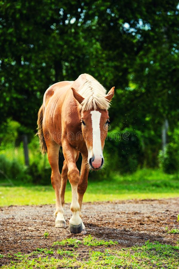 Horse in the pasture, sunny day. Spring time stock photo