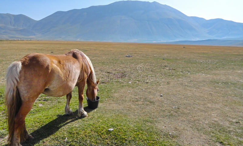 Horse in a peacefull land stock photo
