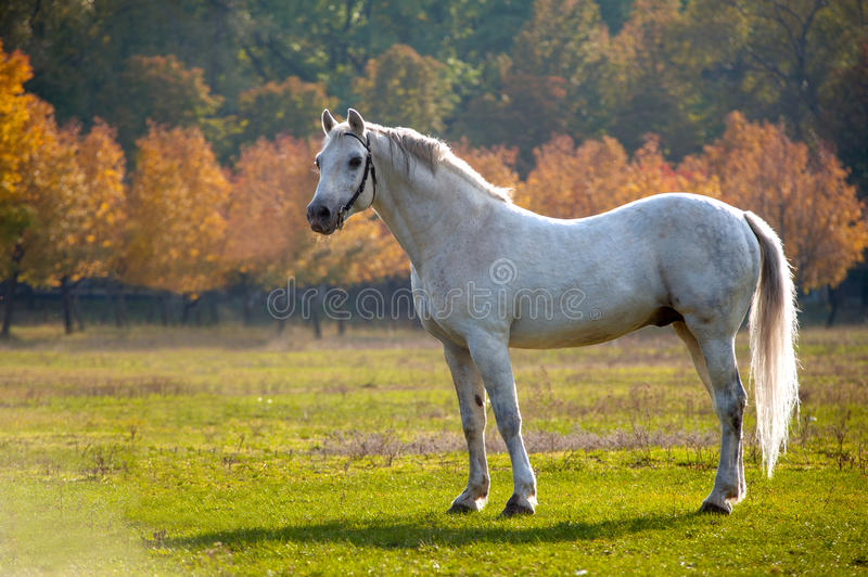 Horse. Photo of a beautiful white horse in nature on a background plant royalty free stock photo