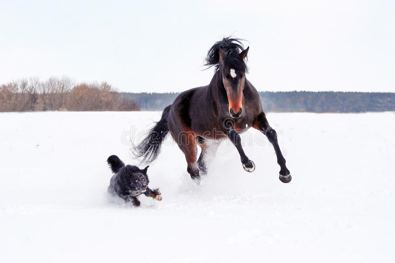 Horse playing with a dog royalty free stock photos