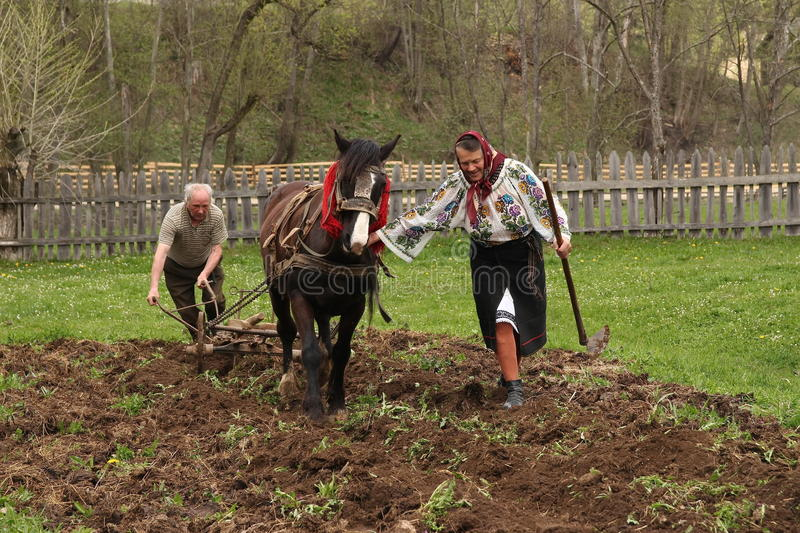 Horse Ploughing. Traditionally Horse pulled ploughing in Bucovina, Romania. Photo taken on: April 30th, 2014 stock photo