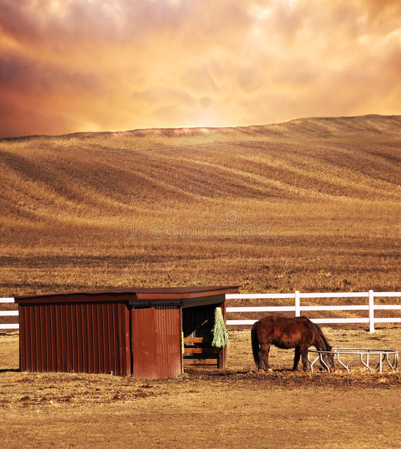 Download Horse and plowed over land stock photo. Image of oats - 23662316