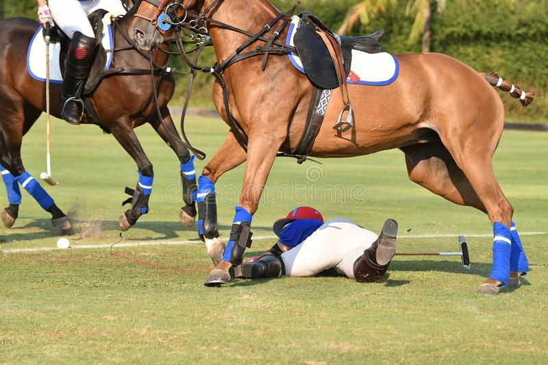 Horse polo player is a accident in match. Selective focus the Horse polo player is a accident in match stock images