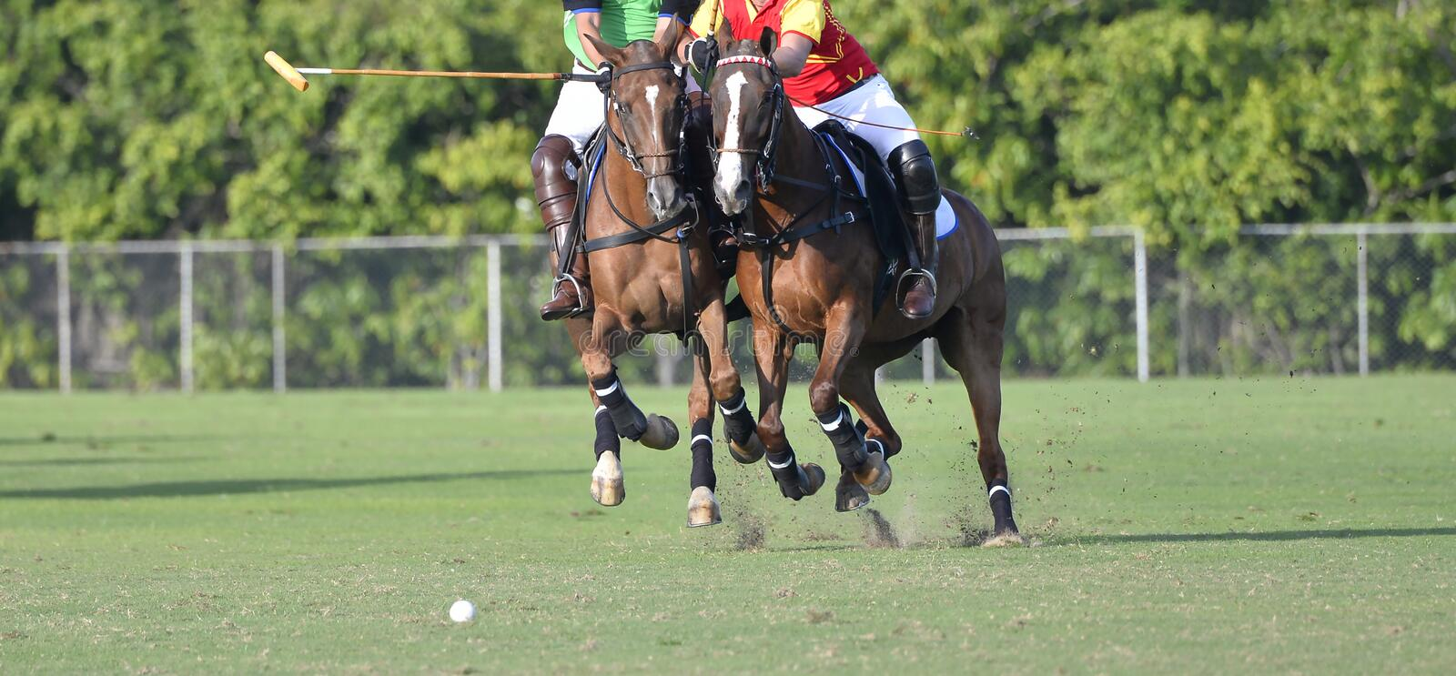 Horse Polo Player battle. In polo game royalty free stock images