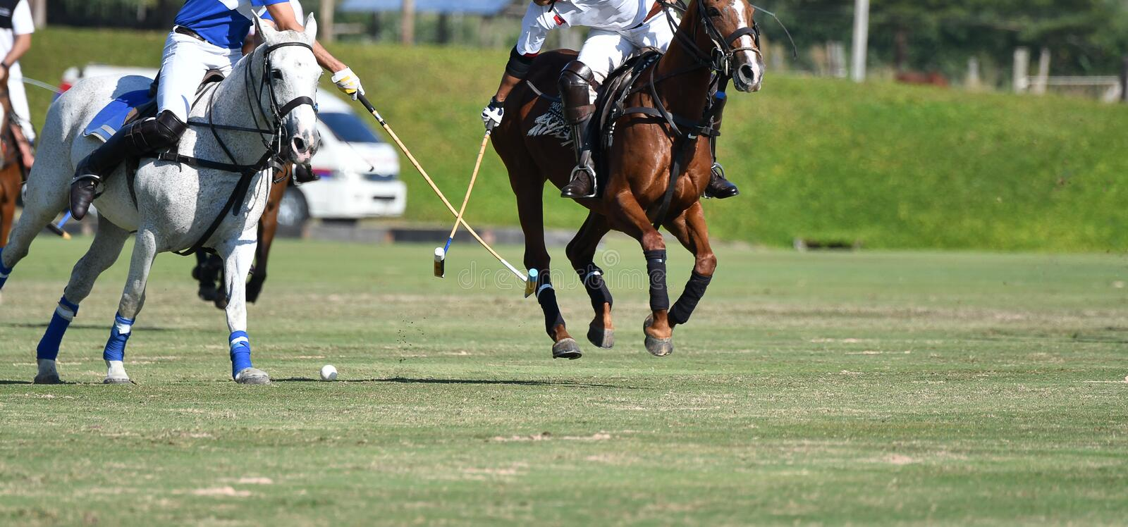 Horse Polo Player protect stock photo