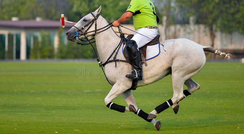 Horse polo player riding. In a polo match stock photography