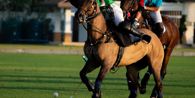 Horse polo player use a mallet hit ball. royalty free stock photo
