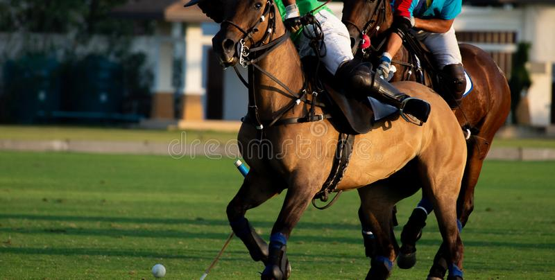 Horse polo player use a mallet hit ball, battle in horse polo sport stock photo