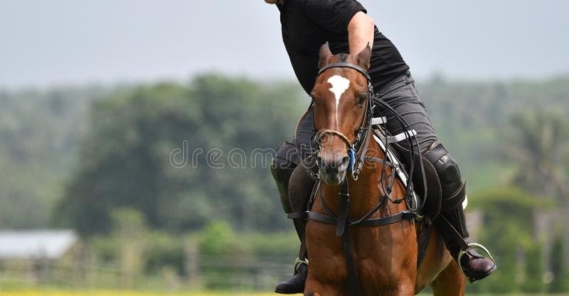 Horse polo are riding. On day Horse polo player are riding in match stock photography