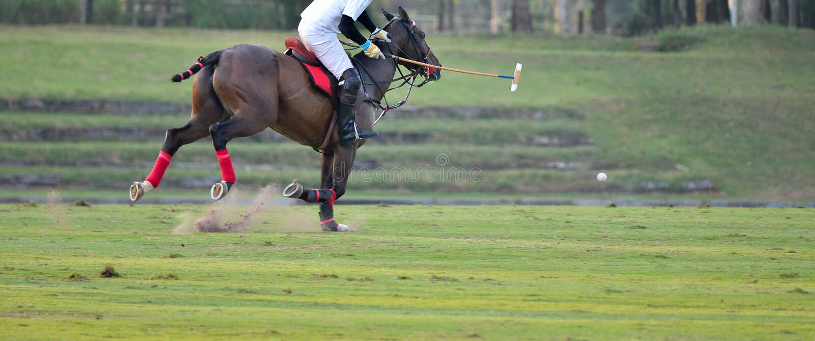 Horse Polo Sport Run In Macth. The Horse Polo Sport Run In Macth royalty free stock images