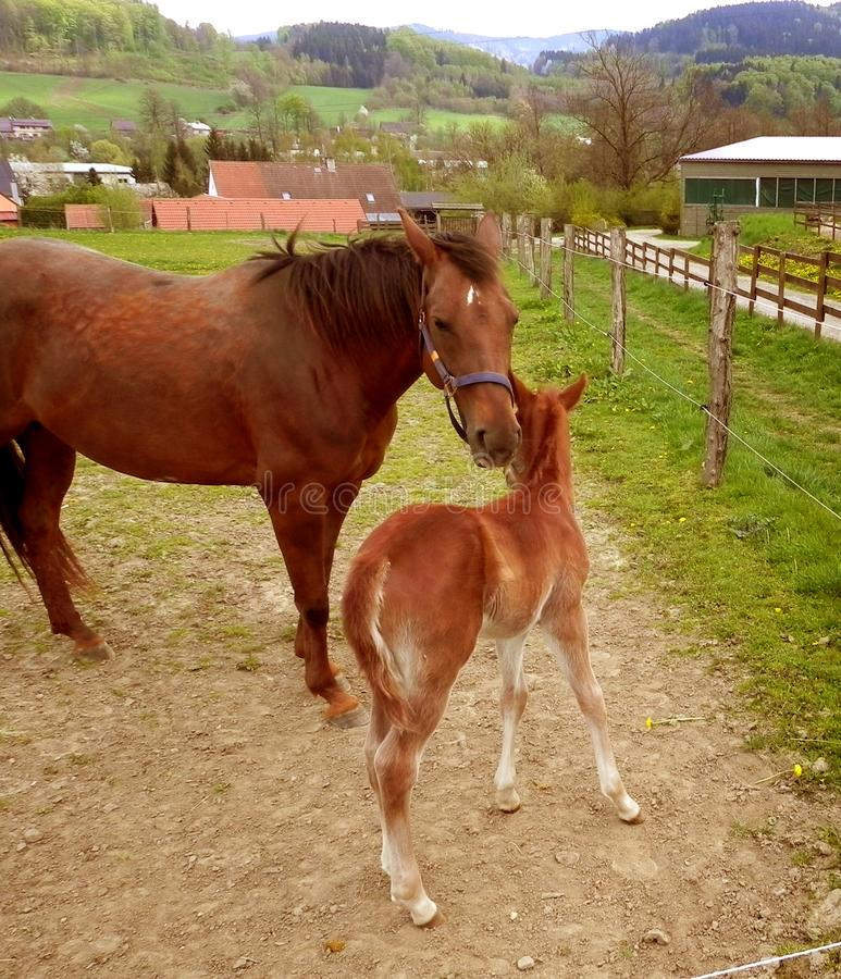 Horse and pony royalty free stock image