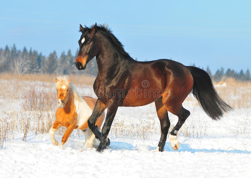 Horse and pony play together royalty free stock photos