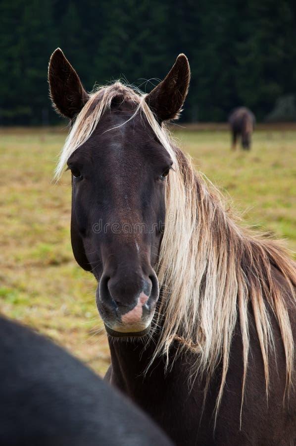 Download Horse portrait stock image. Image of rural, agricultural - 17179573