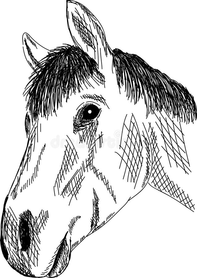 Download Horse portrait stock vector. Image of horse, young, looking - 17808660