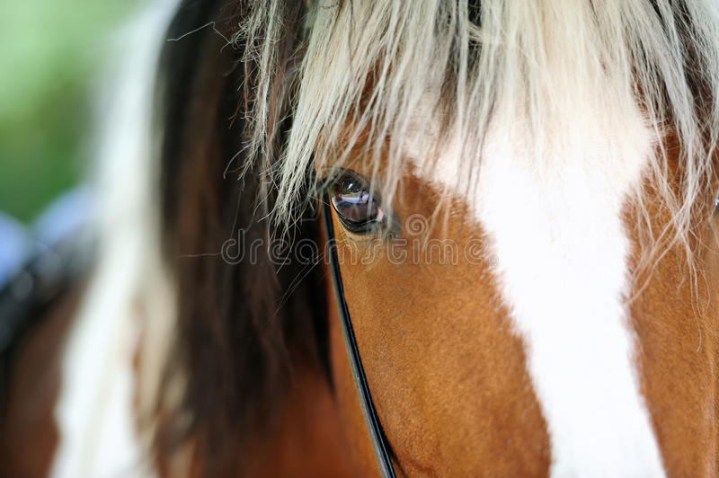 Horse portrait. Close-up horse eye royalty free stock image