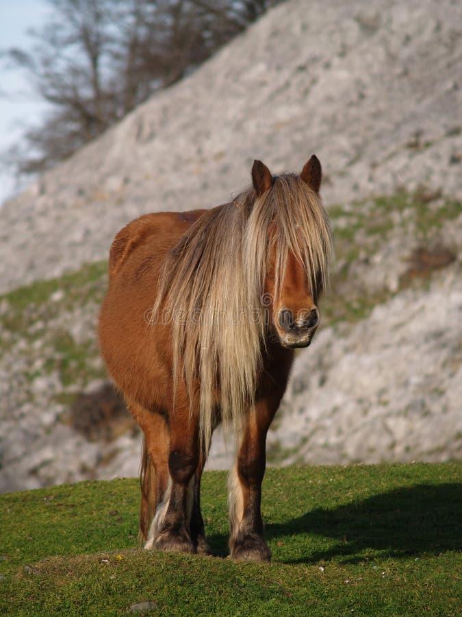 Free Horse Portrait Stock Image - 5146171
