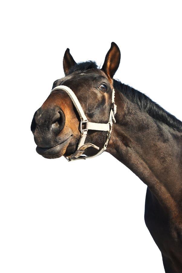 Download Horse portrait stock image. Image of muzzle, portrait - 8442039