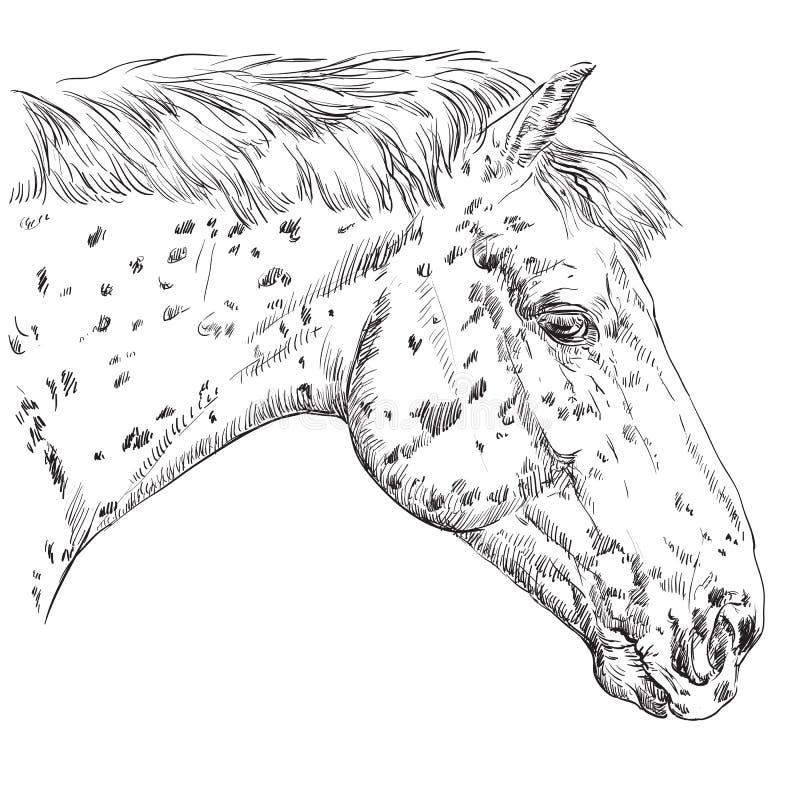 Horse portrait-2 royalty free illustration