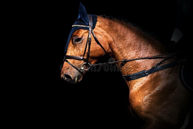 Horse Portrait . stock photos