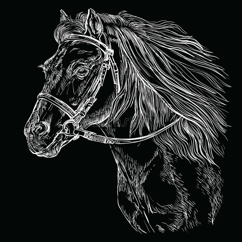 Horse portrait black 21 royalty free illustration