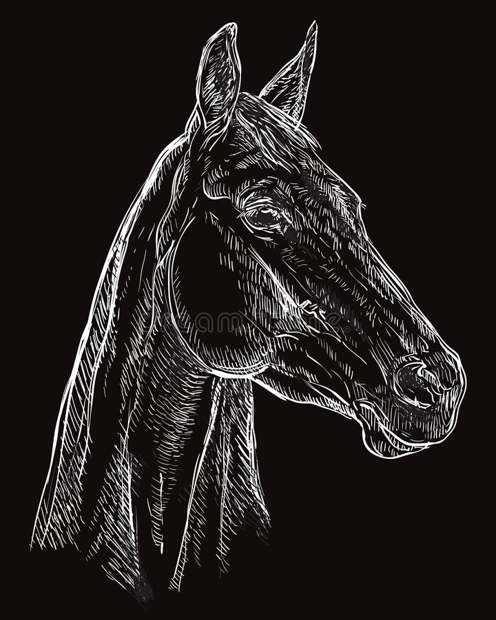 Horse portrait black 25 royalty free illustration