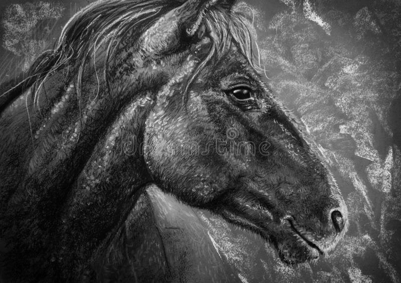 Horse portrait charcoal royalty free illustration
