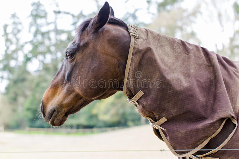 Horse portrait close up. Beauty horse close up portrait stock images