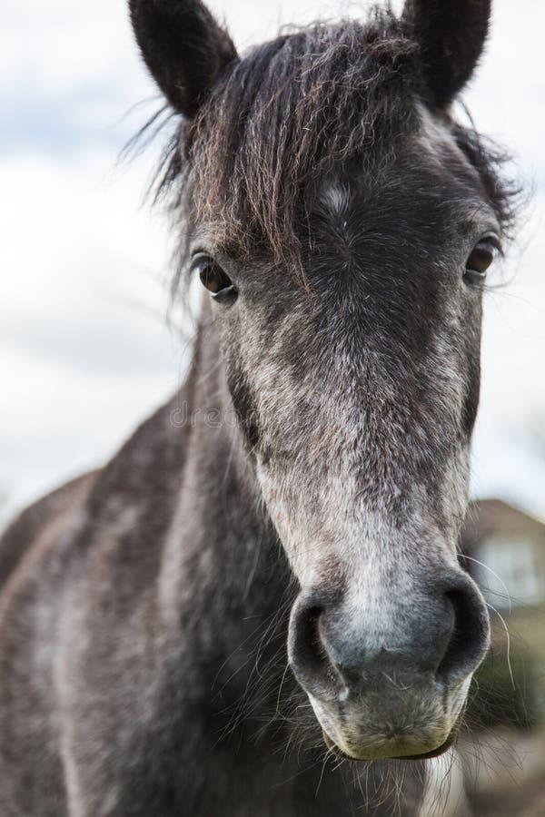 Horse portrait close up. Beauty horse close up portrait royalty free stock photography