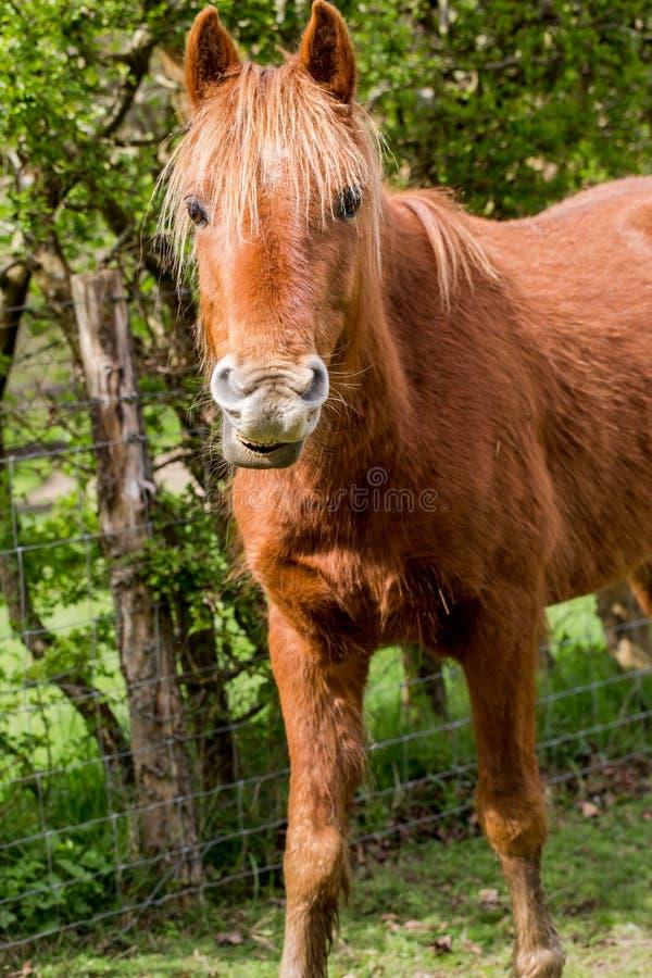 Horse portrait close up. Beauty horse close up portrait stock photos