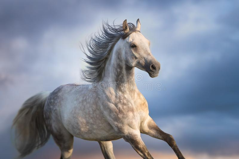 Horse portrait close up in motion royalty free stock photo