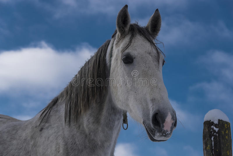 Horse Portrait. On cloudy sky background royalty free stock images