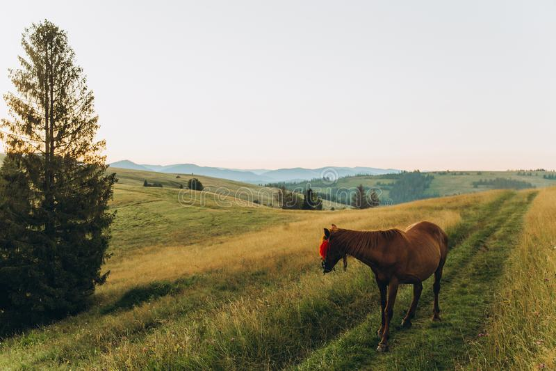 Morning in mountains in summer. Horse early morning in the mountains looks toward the rising sun royalty free stock photo