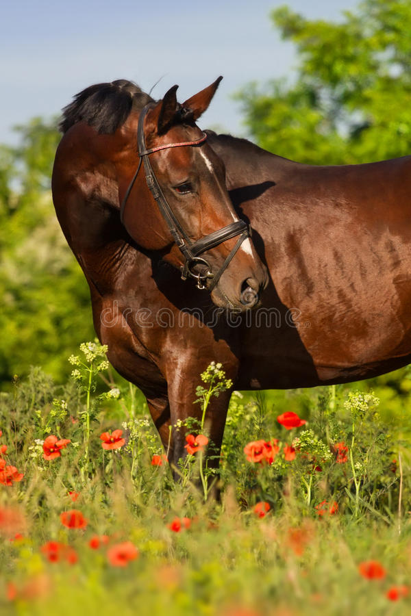 Horse portrait in flowers stock image