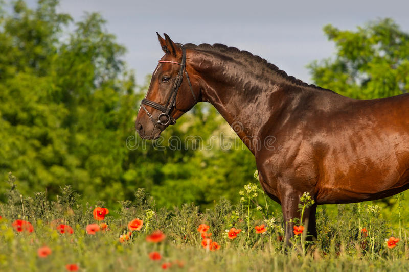 Horse portrait in flowers stock photography