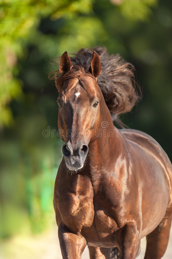 Horse portrait in motion stock image