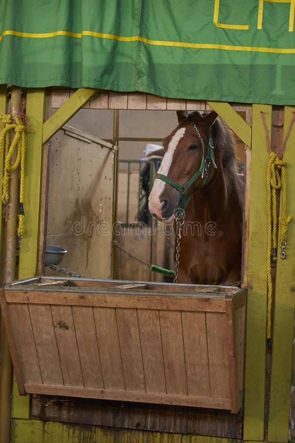 Horse portrait. In the stables stock images