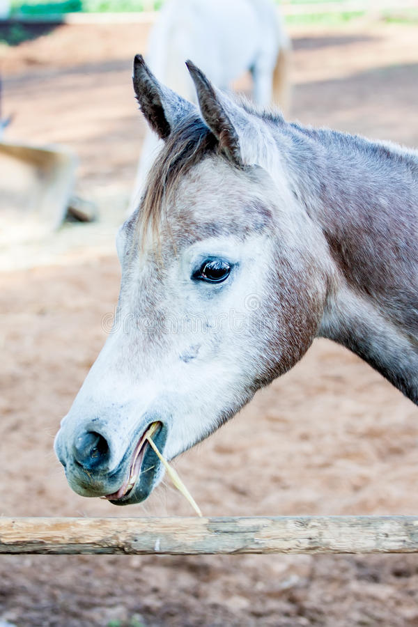 Download Horse stock photo. Image of mammals, black, blue, active - 33297888