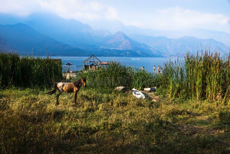 Horse posing on a meadow along Lago Atitlan with mountainrange, San Juan la Laguna, Guatemala, Central America stock image