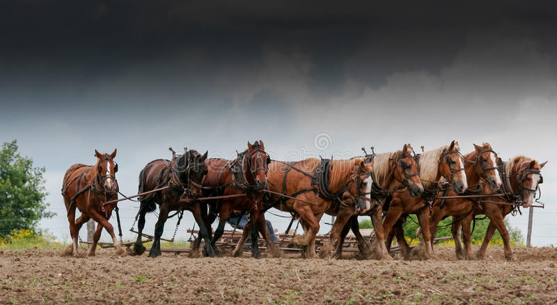 Horse power. royalty free stock images