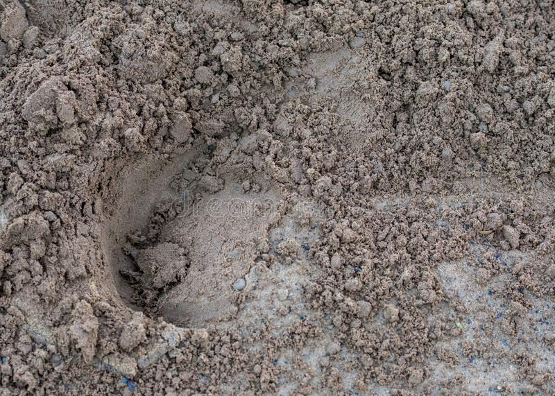 Horse Print in the Dirt. At a racing track stock image